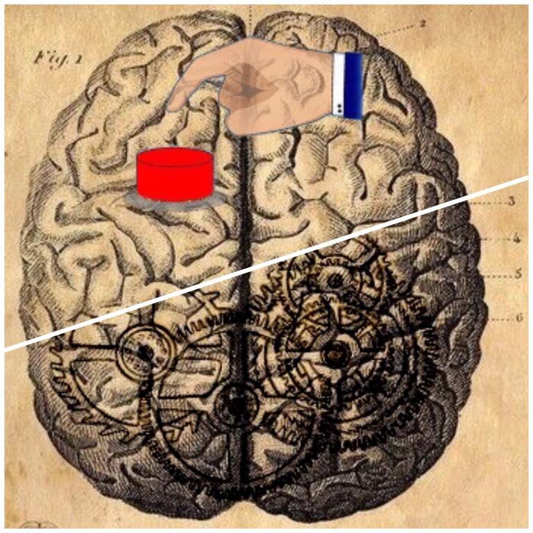 redbutton-thinker brains